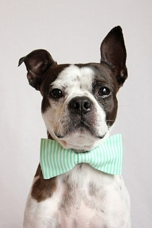 Mint Green and white Striped Dog Bow-tie