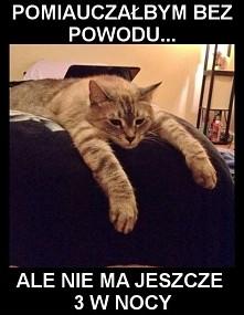ah te koty :D
