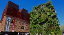 Ogród wertykalny- zielona ściana