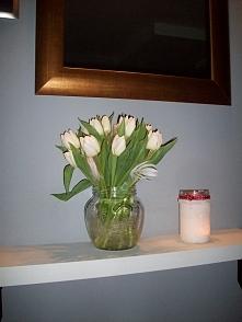 zawsze wolałam żółte tulipa...