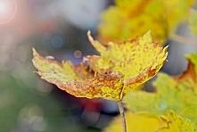 tańczący liść