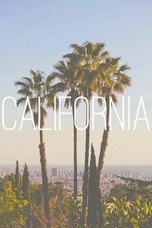 #california #palmy #palms #zieleń #miasto #town #green #niebo #sky #lato #summer