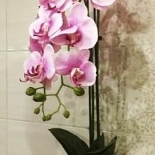 storczyk różowy :)