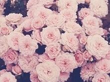 róóóże <3