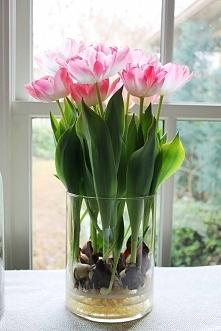 Nie tylko cebulki tulipanów...