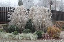 Trawy nawet zimą są przepiękne! :D