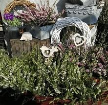 Wrzośce wspaniale wyglądają także w wiosennych aranżacjach.  Dodatkowo urocze ekologiczne dekoracje z drewna...