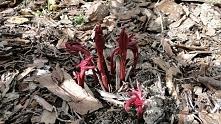 Wiosna wiosna! Piwonie wyszły! :D
