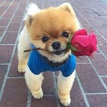 Z różą :)