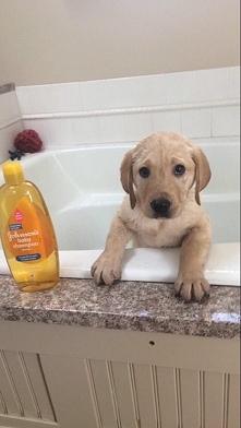 Like = przyjemna kąpiel dla szczeniaczka