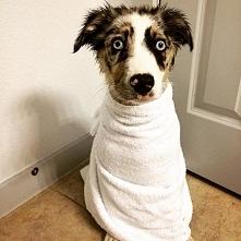 Psiak po pierwszej kąpieli :D