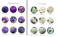 kwiaty na wrzesień/ paździe...