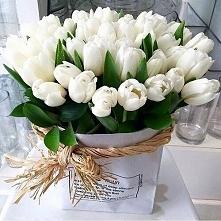 uwielbiam tulipany ♥