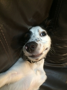 Psie selfie :D