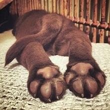 Psie łapki <3
