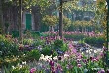 Ogród Moneta w Giverny.