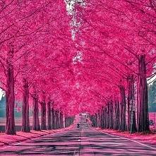 Shiga, Japonia ;)
