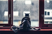 Kot po przejściach...