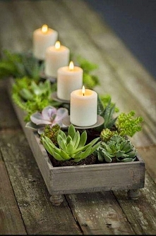 Pomysły na przemycenie roślinności w nasze cztery ściany. Więcej po kliknięciu w zdjęcie :)