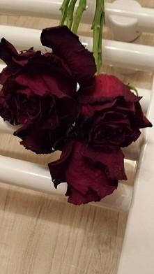 suszone róże