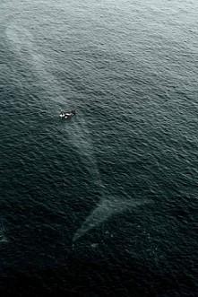 Kto lubi wieloryby  ten w tym zdjęciu widzi coś ekscytującego.