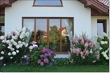 """Marzenie - hortensje... """"ogród bez furtki"""" ;)"""