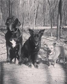 Tym razem moje psy:) brakuje jednego :)