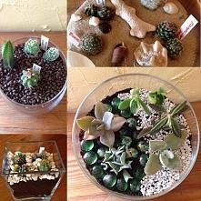 Sukulenty i kaktusy