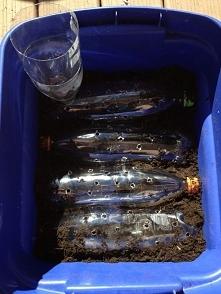 Zamiast wydawać majątek na donice z dnem nawadniającym, można wykorzystać stare butelki, puszki itp.