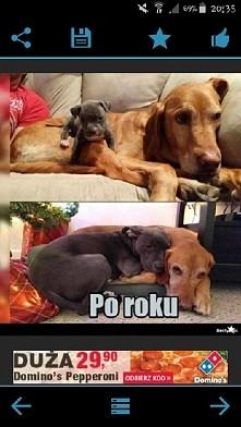 Gdyby ludzie kochali tak jak psy...