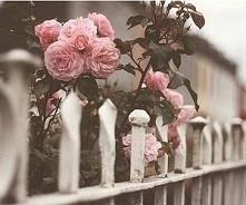 Róże..
