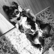 Mój psiak ukochany :)