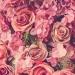 *różyczki*