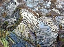 Yuanyang Rice Terraces in Y...
