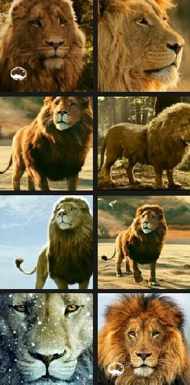 Aslan:)