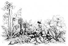 decoupage, transfer - flora