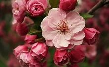 kwiaty <3 drzewo na wios...