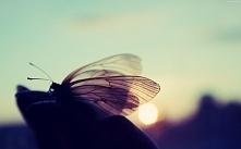 Motyl o wschofzie słońca :3