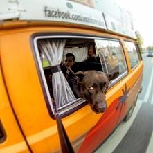 Zwierzaki też lubią podróże...
