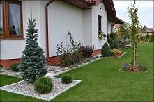 Ogród bez furtki - fajny pomysł na kompozycję pod ścianą domu...