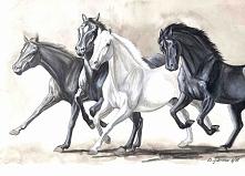 Szkic koni <3