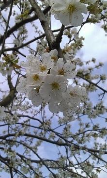 Z tych pięknych kwiatów wyrosną smaczne owocki :3