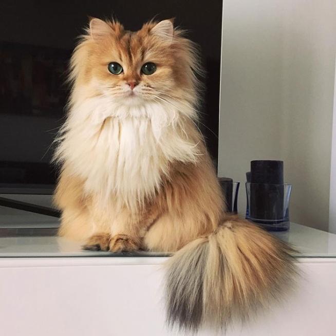 Smoothie - najbardziej fotogeniczny kot świata - cudo <3