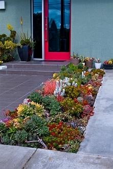 Piękna stylowa rabatka z sukulentów przed domem czyli sukulenty w ogrodzie przy domu - zobacz jak urządzić piękny ogródek przy domu z wykorzystaniem sukulentów, zainspiruj się i...