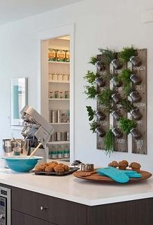 pomysł na zioła w kuchni