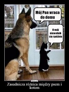 Punkt widzenia koteła i pieseła ;)
