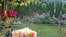 Ogród pod lasem...