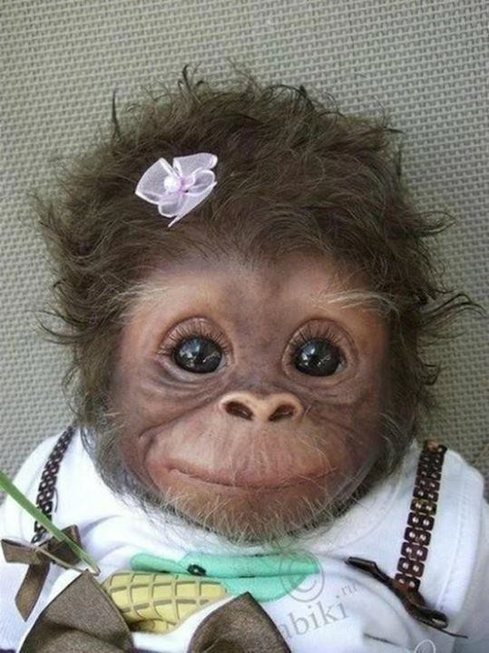 Jedna z piękniejszych małpek Wygląda bardzo uroczo