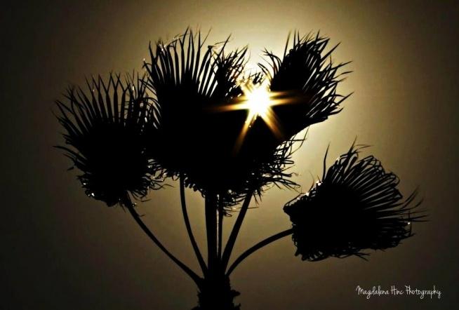 Więcej zdjęć na fb: Magdalena Hinc Photography