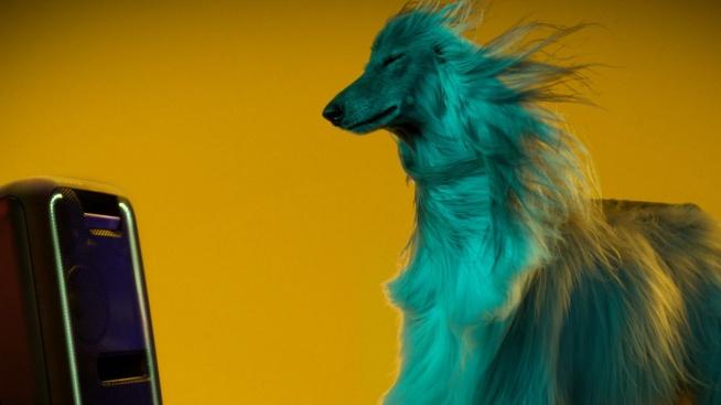 """Na filmie """"Party Animals"""" widać królicze nosy poruszające się w rytm basu, kudłate psiaki bawiące się przy muzyce i koty """"skaczące"""" na parkiecie w takt muzyki."""